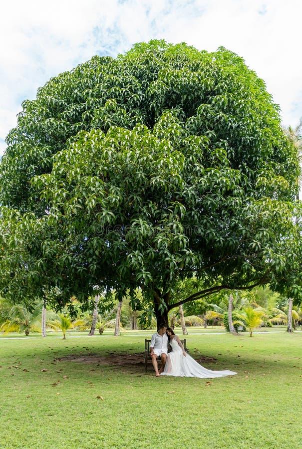 Nygifta personer sitter på en gammal bänk under ett enormt tropiskt träd royaltyfria bilder