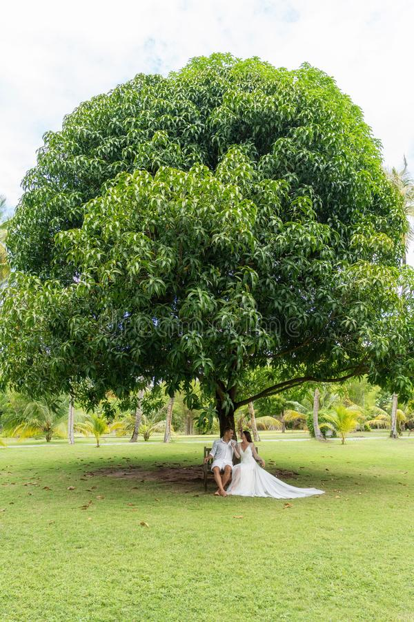 Nygifta personer sitter på en gammal bänk under ett enormt tropiskt träd royaltyfri fotografi