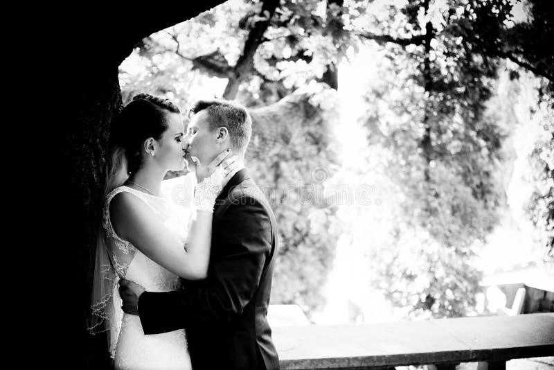 Nygifta personer som kysser under trädet royaltyfria foton