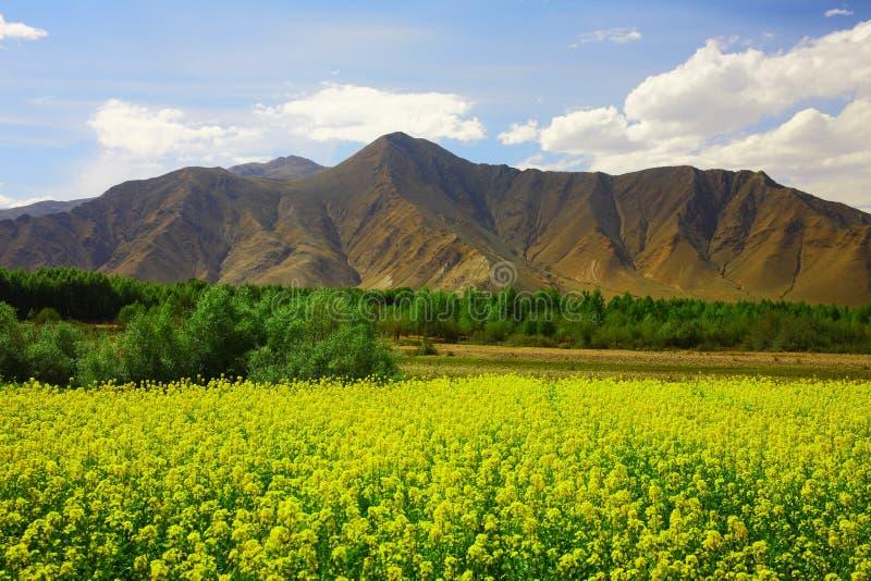 Nyingchi aan Lhasa royalty-vrije stock afbeeldingen