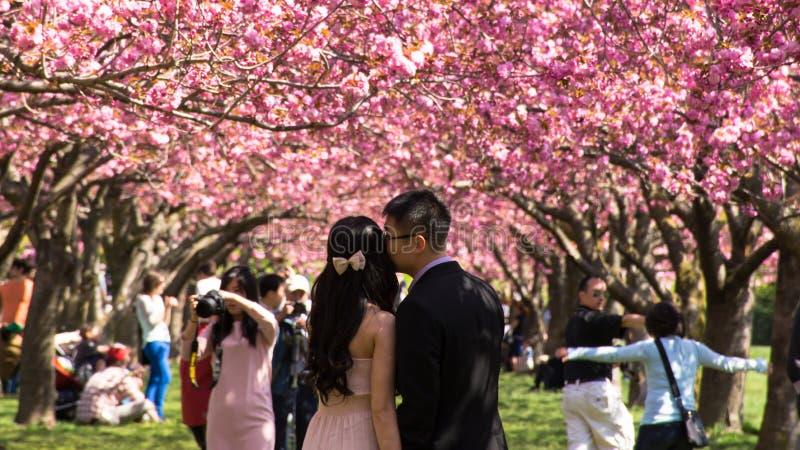 Nyligen gift par på den brooklyn botaniska trädgården royaltyfri bild