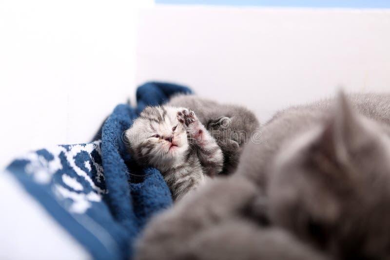Nyligen uthärdad kattunge royaltyfria foton