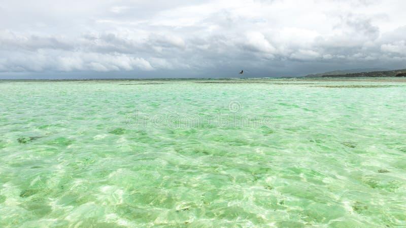 Nylonpölen i grunt djup Tobago för den turist- dragningen av klar täckande korall för havsvatten och vit sandpapprar panoramautsi royaltyfri foto