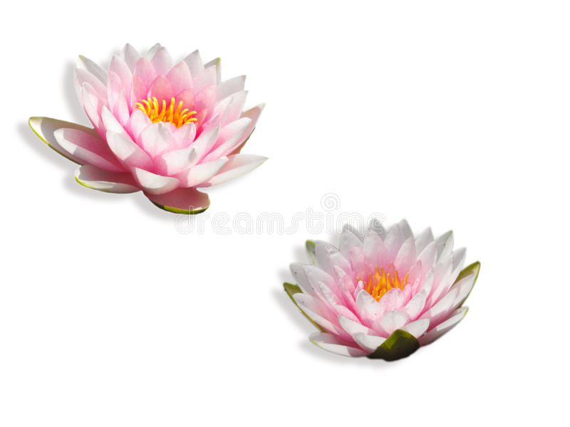 Download Nymph stock photo. Image of flowers, mirror, meditation - 12880654