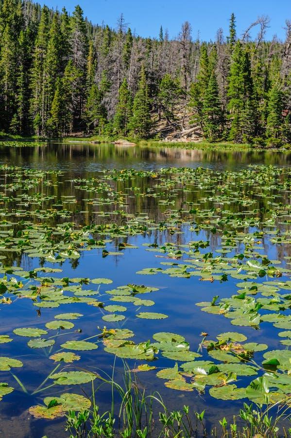 Free Nymph Lake, Colorado Royalty Free Stock Photography - 107109637
