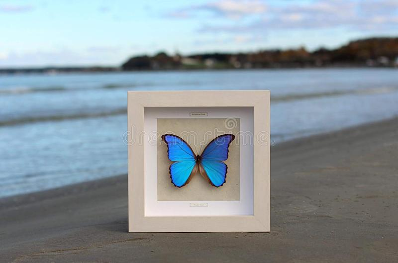 Nymphalidae fotografie stock