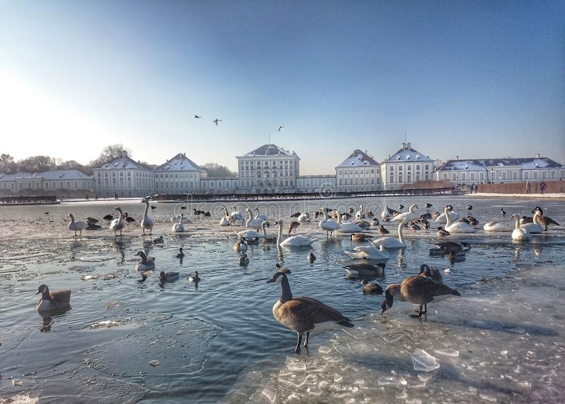 Nymphenburg Roszuje Monachium w zimie z zamarzniętym jeziorem zdjęcie stock