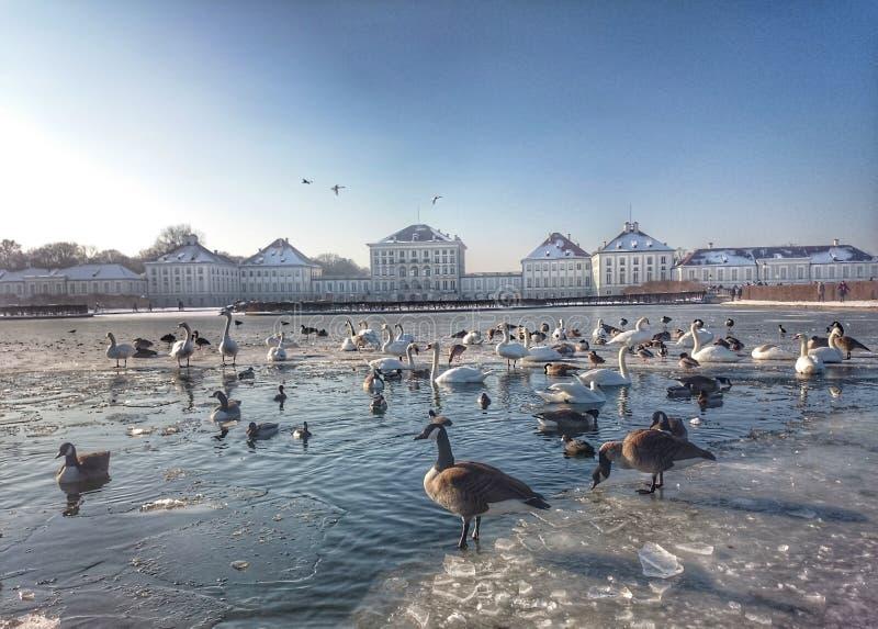Nymphenburg slott Munich i vinter med den djupfrysta sjön arkivfoto
