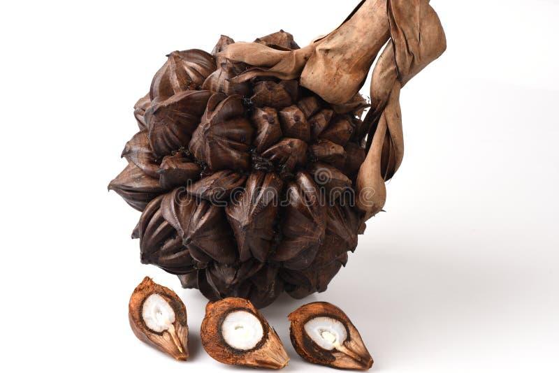 Nypa, Atap palm, Nipa palm, Mangrove palm,fruits. royalty free stock photography