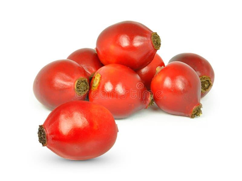 Nyponfrukt arkivfoton