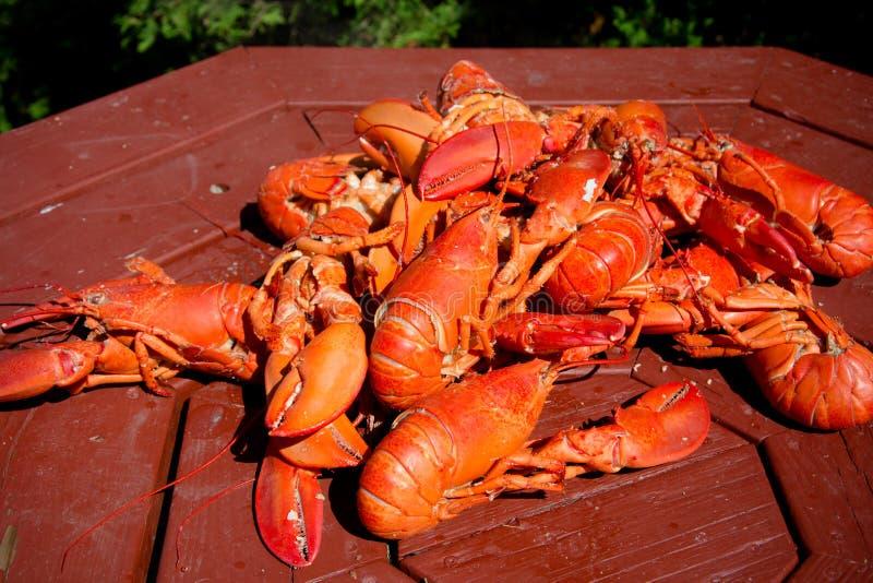 Nytt ångade Maine Lobster royaltyfri bild