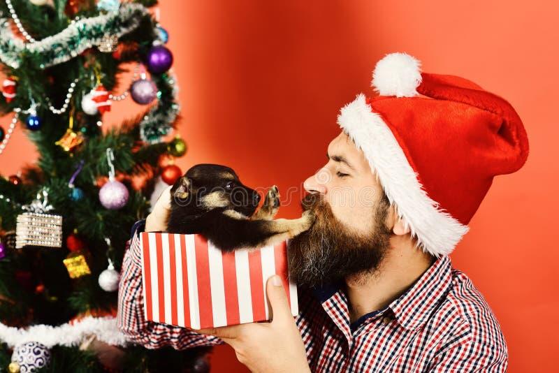 Nytt år av hundbegreppet Vovven skjuter jultomten bort royaltyfri foto