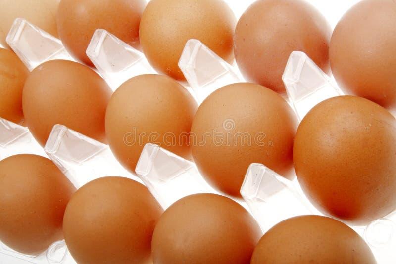 nytt övre för täta ägg royaltyfria foton