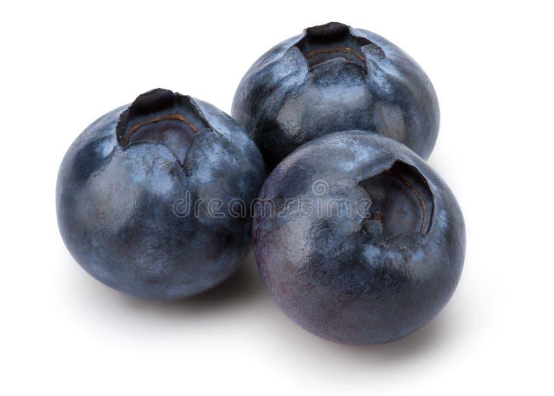 nytt blåbär royaltyfria bilder