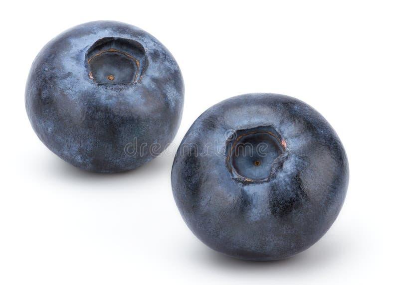 nytt blåbär arkivfoto
