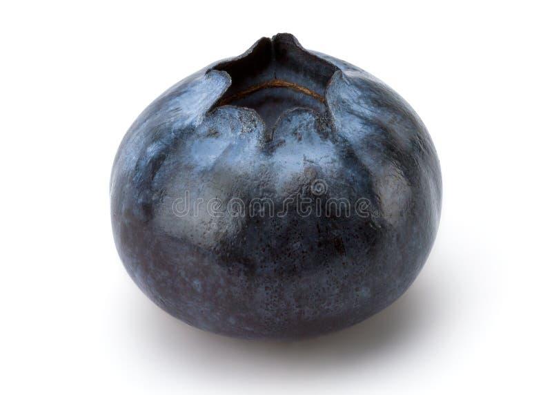 nytt blåbär royaltyfri bild