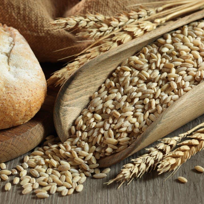 nytt bröd royaltyfri fotografi