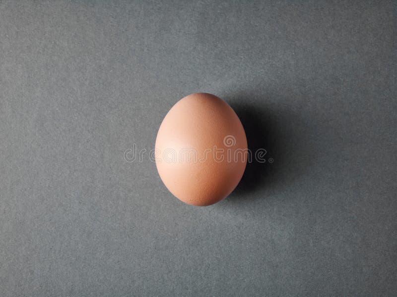 Nytt brunt ägg på grå bakgrund royaltyfri fotografi