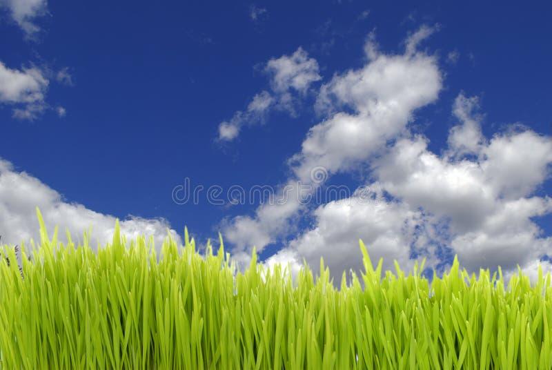nytt gräs arkivfoto