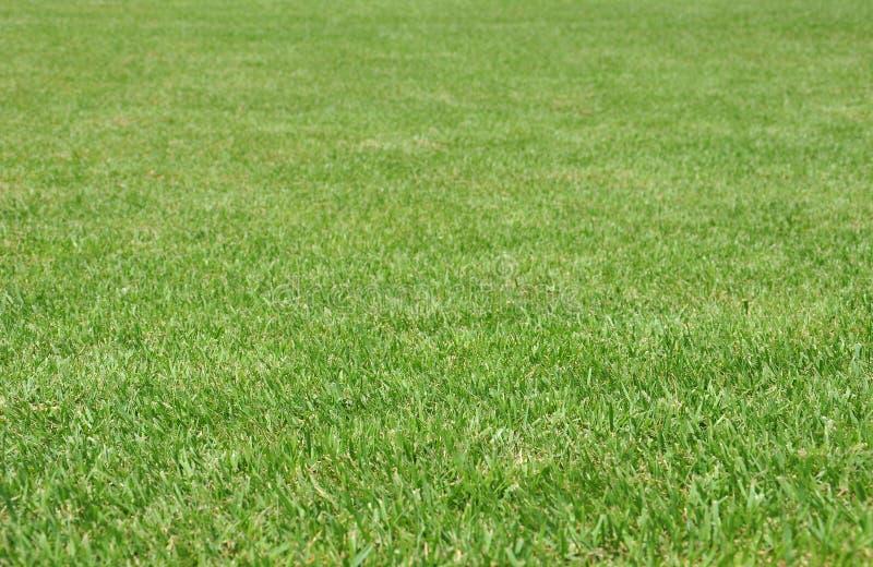 nytt gräs royaltyfri bild
