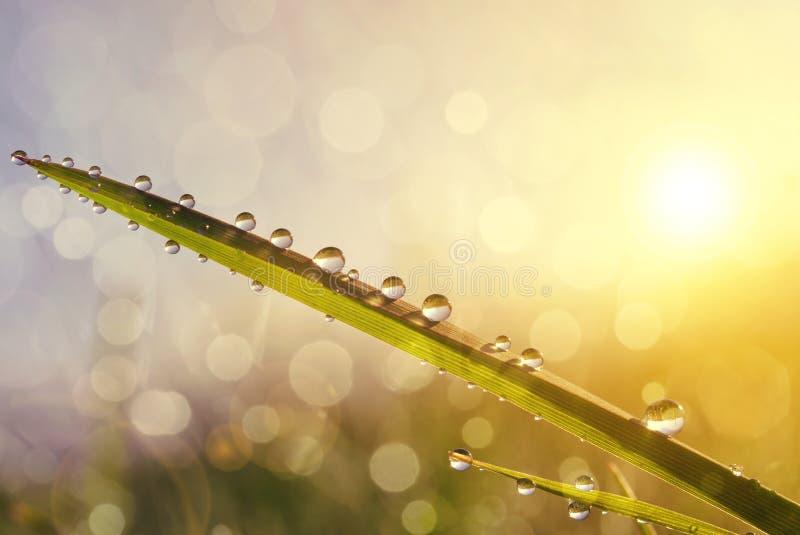 Nytt gräs med daggdroppar på soluppgång arkivbild