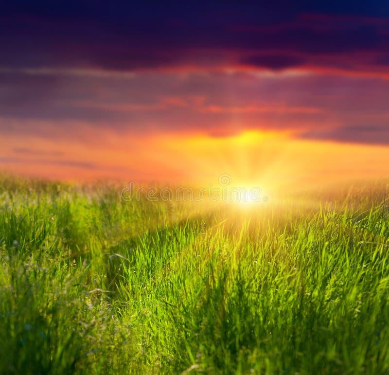 Nytt gräs och dramatisk sky royaltyfria foton