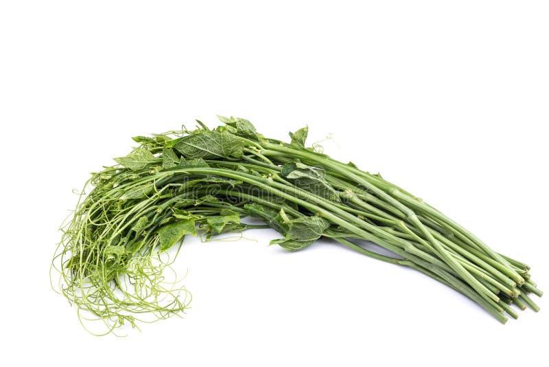 Nytt grönt chayoteblad som isoleras på vit bakgrund royaltyfri foto