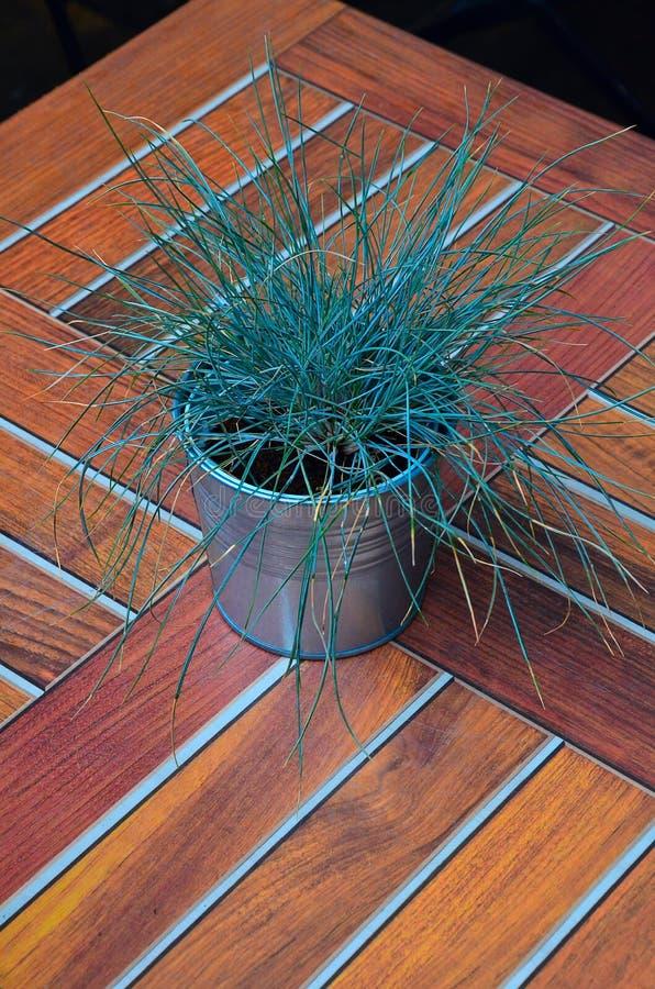 Nytt grönt gräs i en liten metallhink på den träbruna tabellen beskådar uppifrån arkivfoto