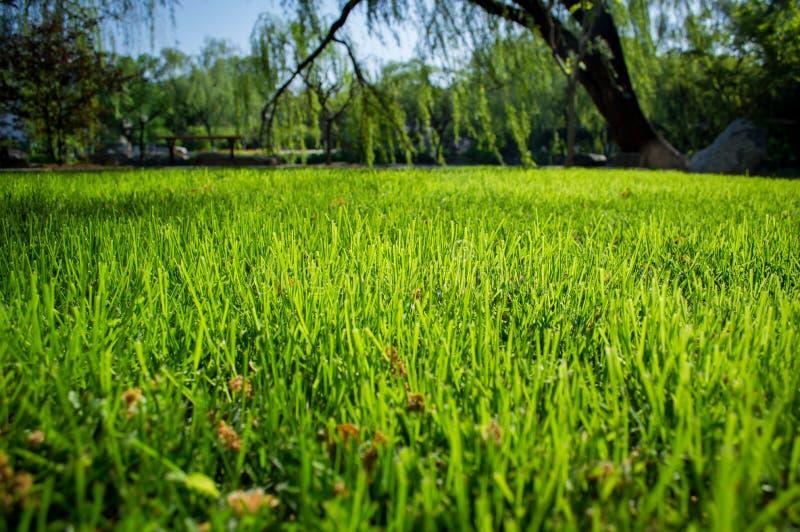 Nytt grönt gräs i vår arkivfoto