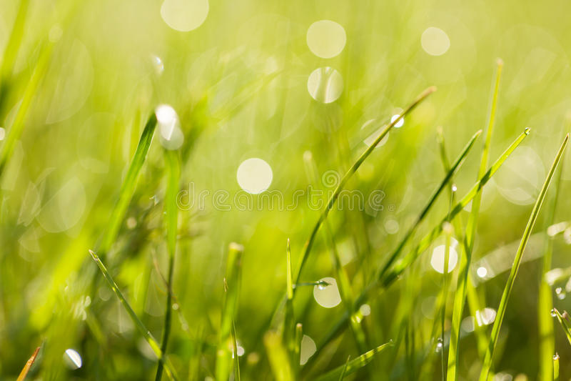 Nytt grönt gräs med daggdroppar på soluppgång royaltyfri bild