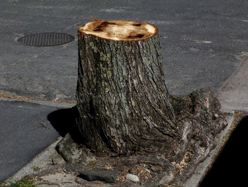 Nytt klippt sjukt moget träd med att återstå för trädstubbe arkivbild