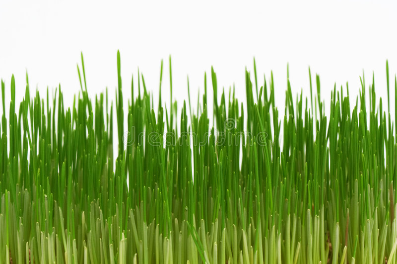 nytt korn arkivfoto