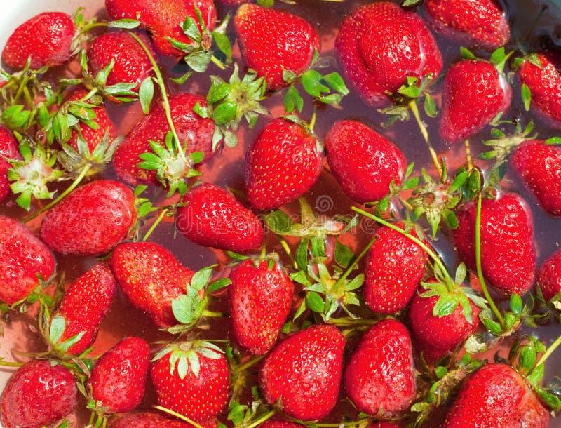 nytt många organiska röda jordgubbar royaltyfri fotografi