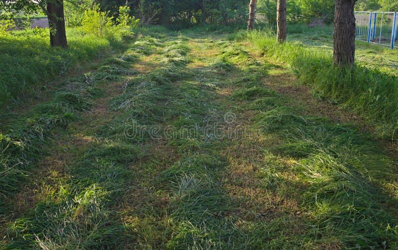 Nytt mejat gräs parkerar in med trädstammar omkring arkivbilder