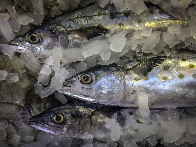 Nytt mjölka fisken på is i asiatisk marknad royaltyfria bilder