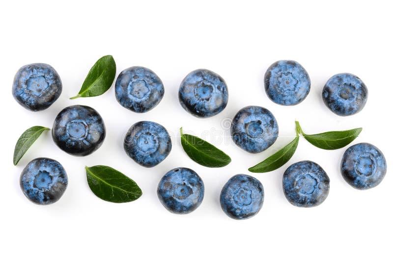 Nytt moget blåbär med sidor som isoleras på vit bakgrund Top beskådar Lekmanna- modell för lägenhet arkivbild