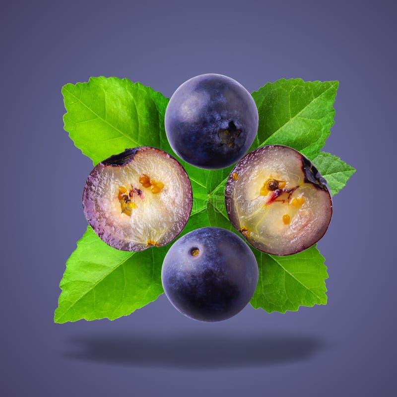 Nytt moget blåbär som isoleras över en blå bakgrund royaltyfria foton
