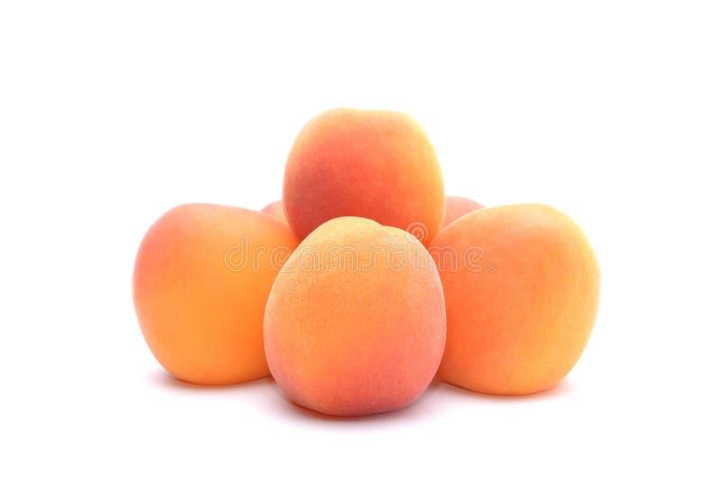 nytt moget för aprikosar royaltyfria bilder