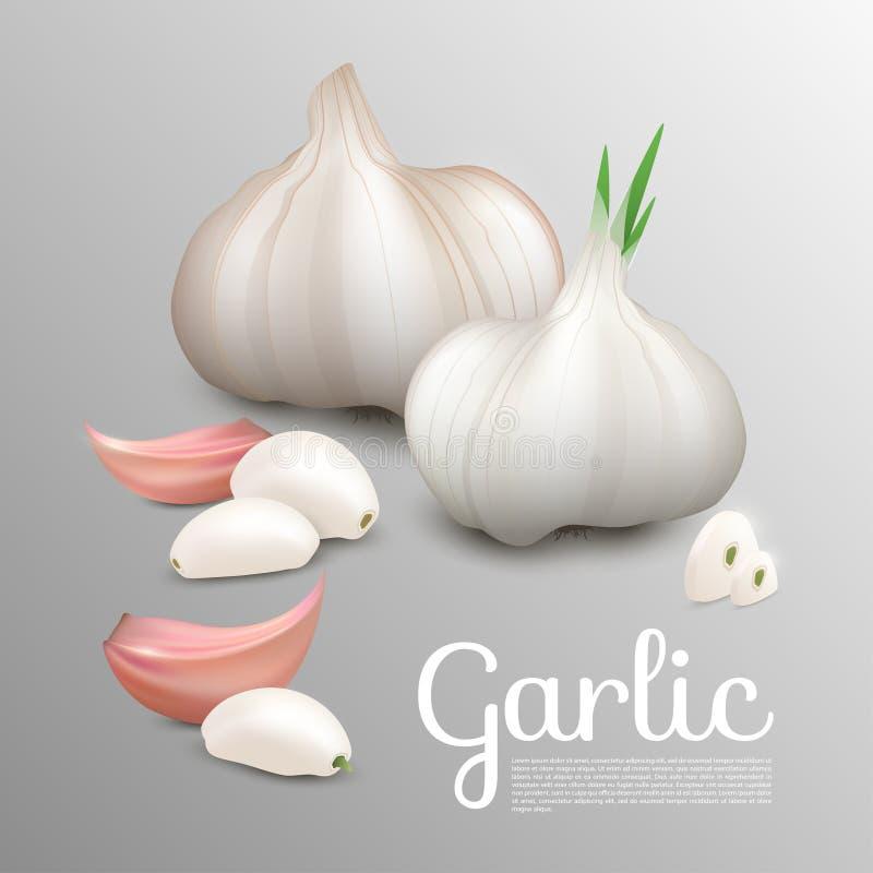 Nytt naturligt vitlökbegrepp stock illustrationer