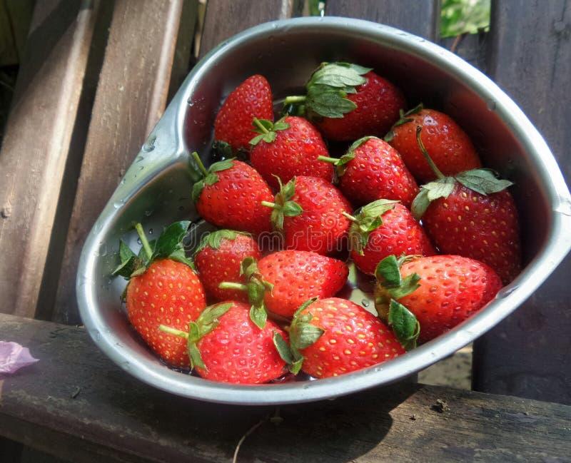 Nytt och sött mogna jordgubben från fältet royaltyfri bild