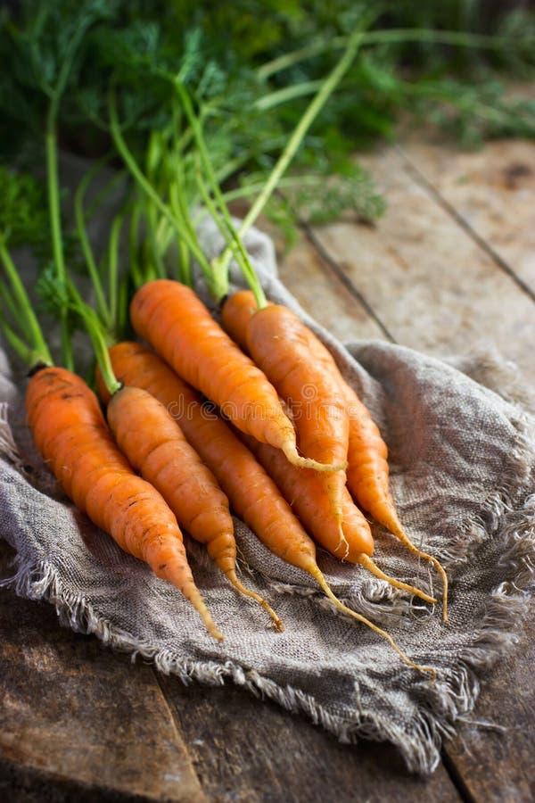nytt organiskt för morötter arkivbild