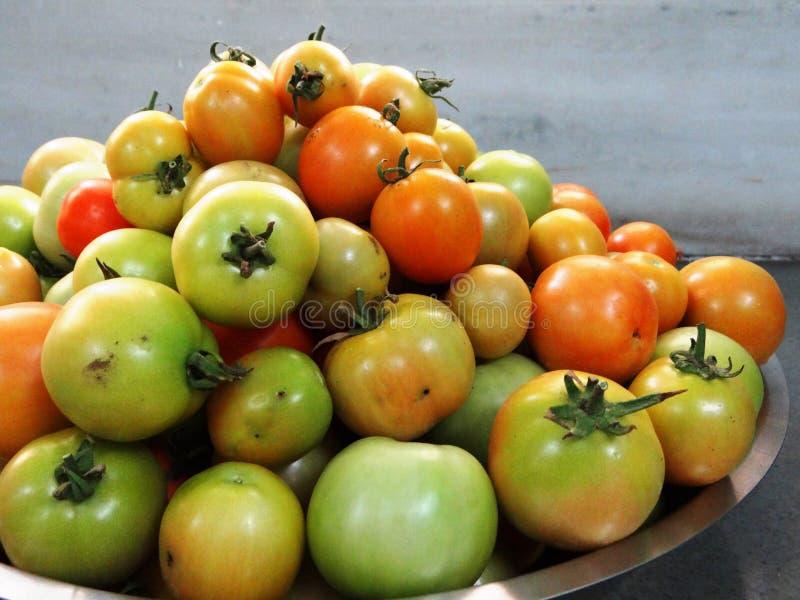 Nytt plockade tomater royaltyfri fotografi