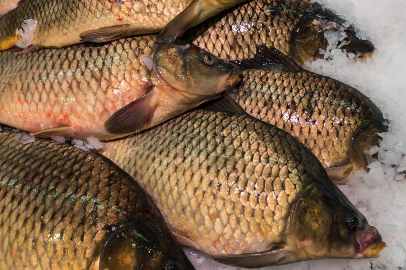 nytt rått för fisk royaltyfri foto