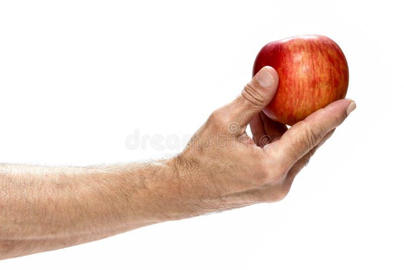 Nytt rött äpple i den härliga handen som isoleras på vit bakgrund. arkivfoton