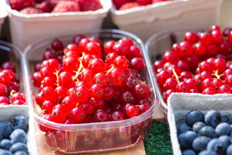 Nytt Redcurrant och blåbär på försäljning på en marknad Sund läcker färgrik frukt för fruktsafter och efterrätter arkivfoto