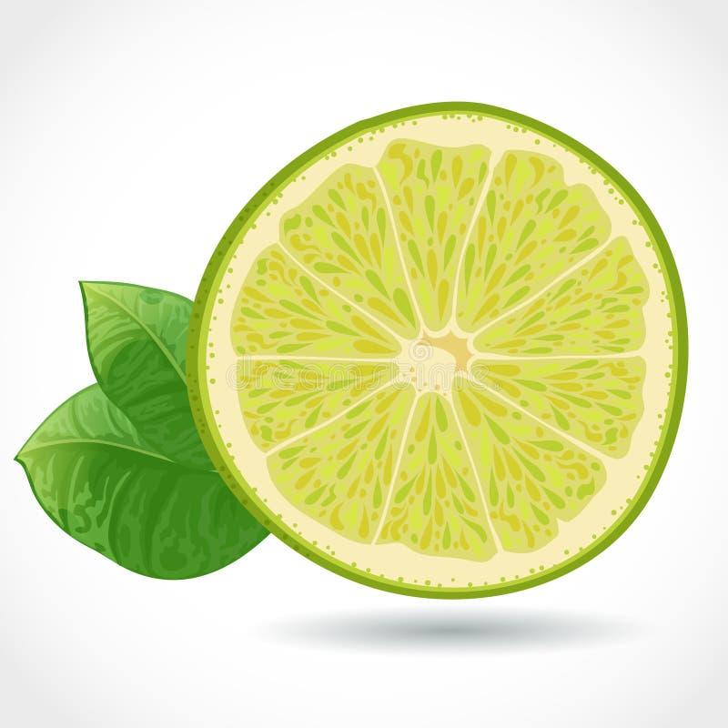 Nytt saftigt lappar av limefrukt   vektor illustrationer