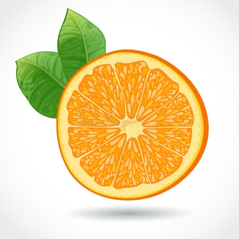 Nytt saftigt lappar av apelsinen   stock illustrationer