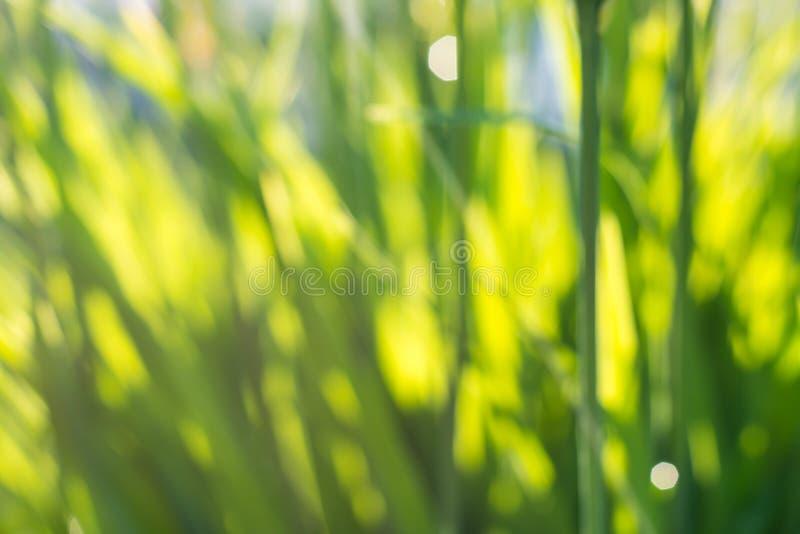 Nytt saftigt ungt gräs i natur i strålarna av solljus med en härlig mousserande bokeh och nyckelpiga på en grön bladmakro arkivbilder