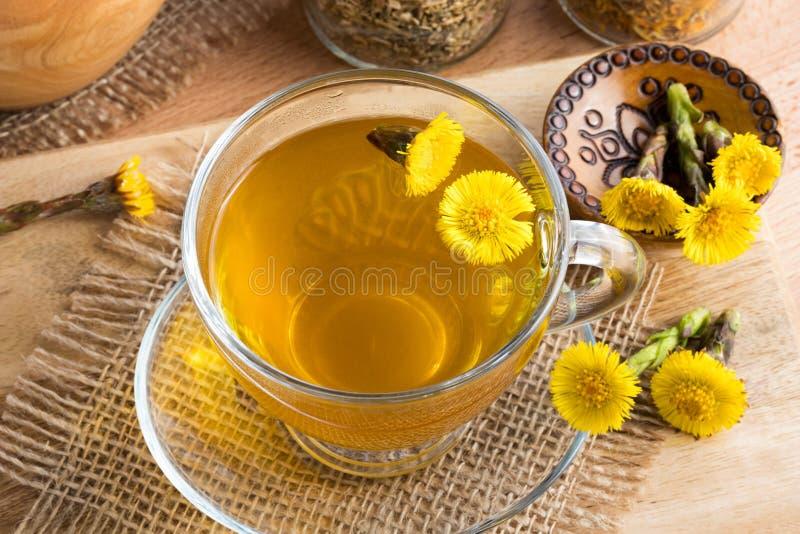 Nytt te för tussilagoTussilagofarfaraen med tussilagot blommar arkivbild