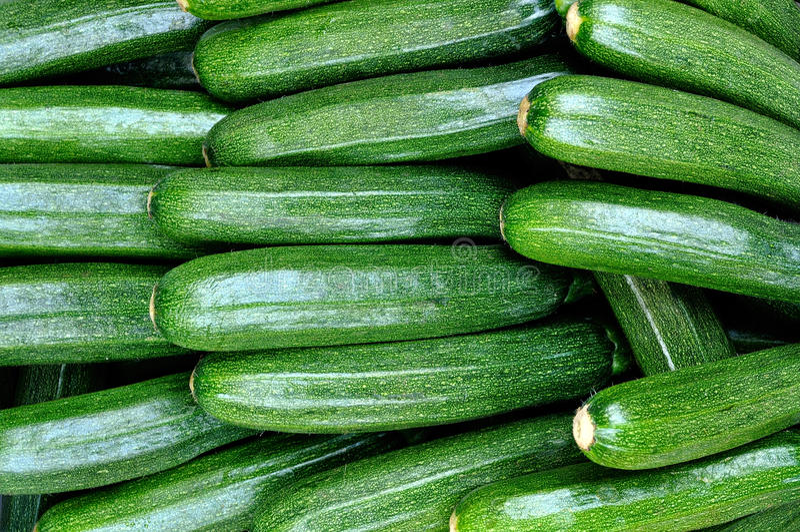 Nytt vald zucchini royaltyfria foton